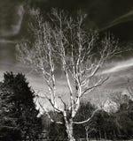 Bel arbre avec l'obscurité Images stock