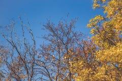Bel arbre avec les feuilles oranges Photographie stock