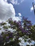 Bel arbre avec les fleurs pourpres image stock