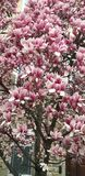 Bel arbre avec plus de fleurs photographie stock