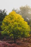 Bel arbre coloré seul se tenant Photo stock