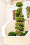 Bel arbre décoratif près du bâtiment de ville Photo stock