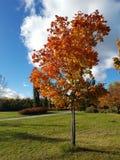 Bel arbre d'automne avec les feuilles colorées Photo libre de droits