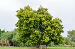 Bel arbre dans l'arborétum de Los Angeles Image stock