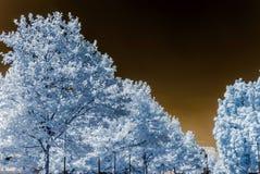 Bel arbre dans la vue infrarouge, couleurs nonreal, jour ensoleillé Image stock