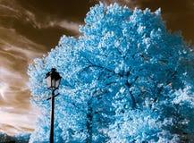 Bel arbre dans la vue infrarouge, couleurs nonreal, jour ensoleillé Images stock