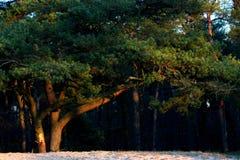 Bel arbre dans les bois Photographie stock libre de droits