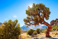 Bel arbre dans les montagnes près du volcan de Tunupa en Bolivie photographie stock