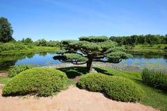 Bel arbre de bonsaïs aux jardins botaniques de Chicago images libres de droits