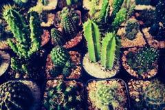 Bel arbre de cactus dans les jardins ext?rieurs et les parcs publics image stock