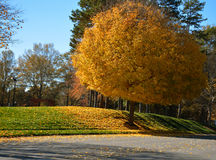 Bel arbre de chute Image stock