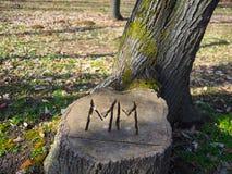 Bel arbre de coupe avec des initiales Photos libres de droits