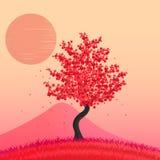 Bel arbre de fleurs de cerisier Images libres de droits