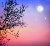 Arbre de floraison au-dessus de ciel nocturne Images libres de droits