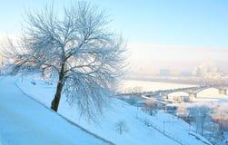 Bel arbre de l'hiver en gel intense et ciel bleu rose photographie stock libre de droits