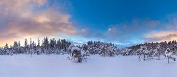 Bel arbre de neige de paysage d'hiver photo stock