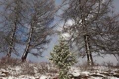 Bel arbre de Noël magique Photographie stock libre de droits