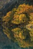Bel arbre et réflexion d'automne dans le lac de miroir Images stock