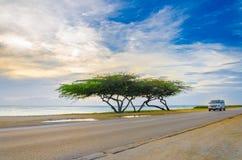 Bel arbre exotique sous l'heure d'or magique Photo stock