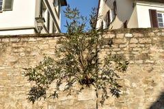 Bel arbre impair photographie stock libre de droits