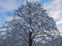 Bel arbre neigeux d'hiver, Lithuanie Photo stock