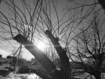 Bel arbre tordu contre le ciel et le soleil de aveuglement photographie stock