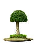Bel arbre vert Image libre de droits