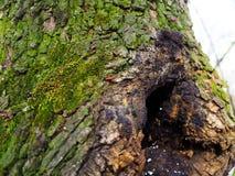 Bel arbre vert avec quelques insectes Photographie stock