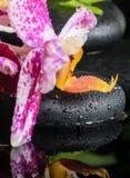 Bel arrangement de station thermale d'orchidée lilas de belle dentelle (phalaenops Photographie stock libre de droits