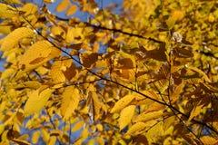 Bel automne Image libre de droits