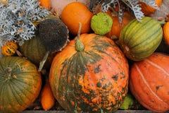 Bel automne coloré de potirons en octobre - dans le jardin images libres de droits