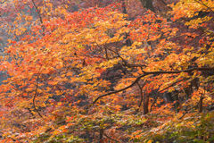 Bel automne coloré sur la montagne à Séoul Corée Photographie stock