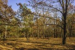 Bel automne dans le paysage d'automne de forêt photographie stock