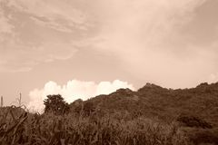 Bel avant de champ de maïs de ciel bleu Thaïlande Asie de colline Vinta Images libres de droits