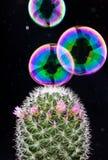 Bel en cactus Stock Afbeeldingen