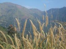 Bel endroit Wagamon_2 du Kerala image libre de droits