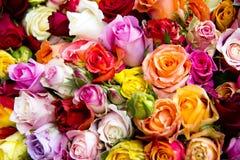 Bel ensemble de fleurs Image libre de droits