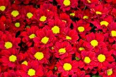 Bel ensemble de fleurs Image stock