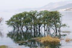 Bel Erhai arbre de Yunnan, Chine Dali dans l'eau Photos stock