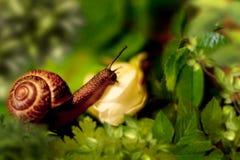 Bel escargot dans des feuilles vertes image libre de droits