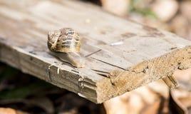 Bel escargot pendant la saison d'élevage Photographie stock libre de droits