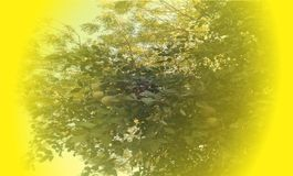 Aegle Marmelos and azadirachta branchs   vector background stock photo
