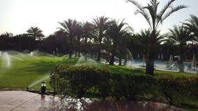 Bel hôtel en Egypte, avec des paumes et le waterpool banque de vidéos