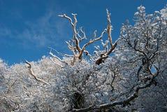 Bel hiver Photos libres de droits