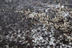 Bel hiver d'oiseau, arbre, nature, neige, branche, gel, froid, blanc, ressort, glace, ciel, plumes colorées de blossomwith sur l' images libres de droits