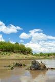 Bel horizontal africain. Masai Mara, Kenya Image libre de droits
