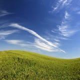 Bel horizontal avec l'herbe verte et le ciel bleu Image libre de droits