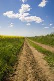 Bel horizontal d'été avec la route Photo libre de droits