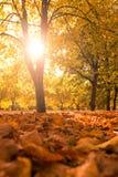 Bel horizontal d'automne images libres de droits