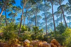 Bel horizontal de forêt photo stock